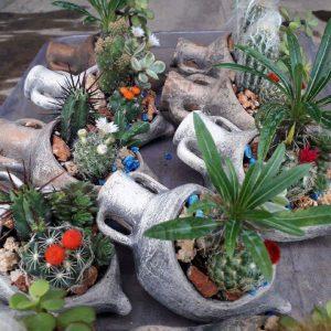 Amfore+kaktusi m